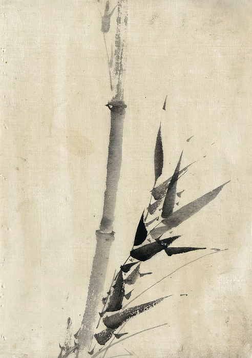 1850 Photograph - Japan: Bamboo, C1830-1850 by Granger
