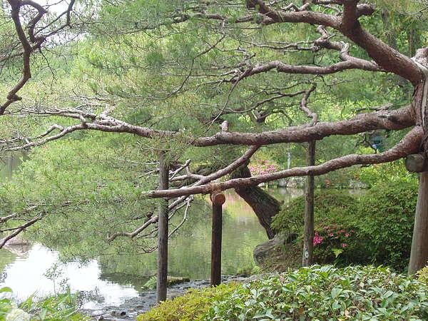 Japan Photograph - Japanese Landscape Viii by Wendy Uvino
