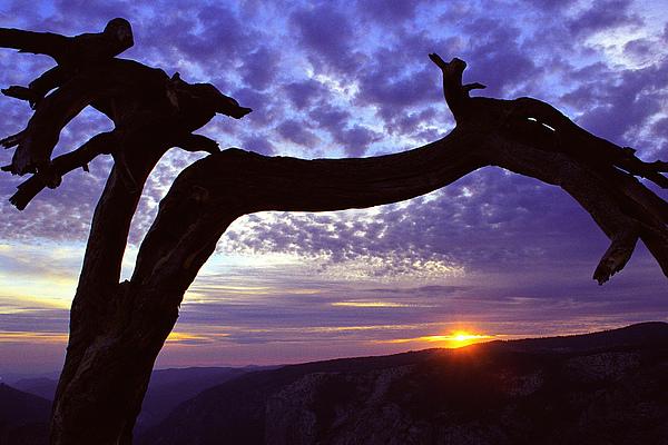 Jeffrey Pine Photograph - Jeffrey Pine Sentinel Dome by Alan Lenk