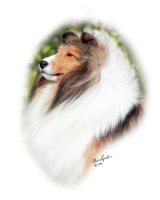 Dog Photograph - Jkc Jcc Ch Seaside Fairy Jp Indy Rider-2 by Chris Lynch