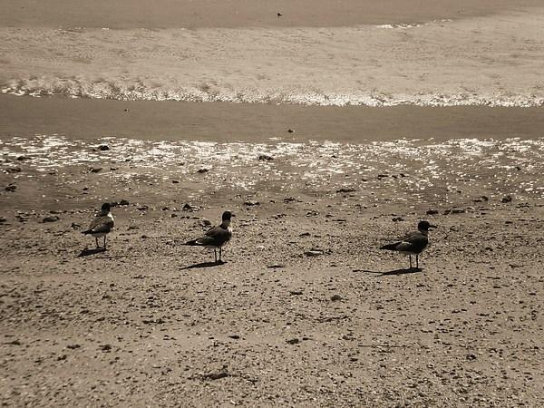 Birds Photograph - Joy. by Katie Wallace