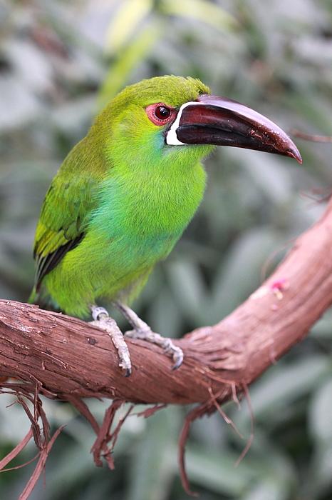 Bird Photograph - Jungle Swing by Paul Slebodnick