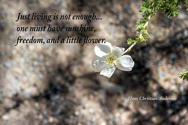 Inspirational Photograph - Just Living by Nadine Berg