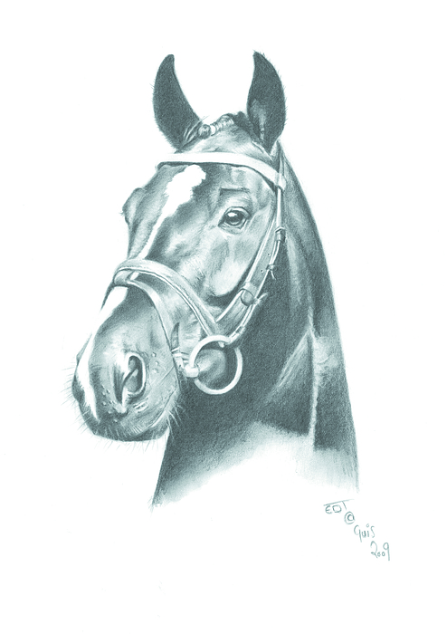 Horse Drawing - Just Looking by Ed Teasdale