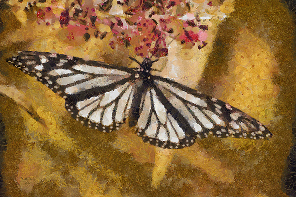 Butterfly Photograph - Karma by Trish Tritz