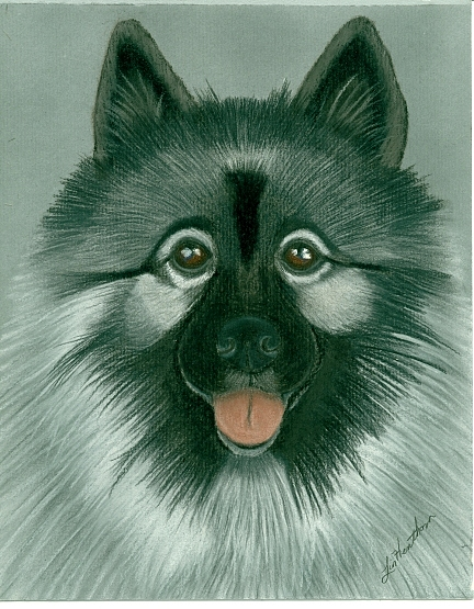 Keeshond Painting - Keeshond by Linda Henthorn