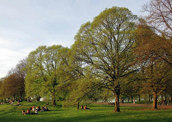Springtime Photograph - Kensington Gardens by David L Griffin
