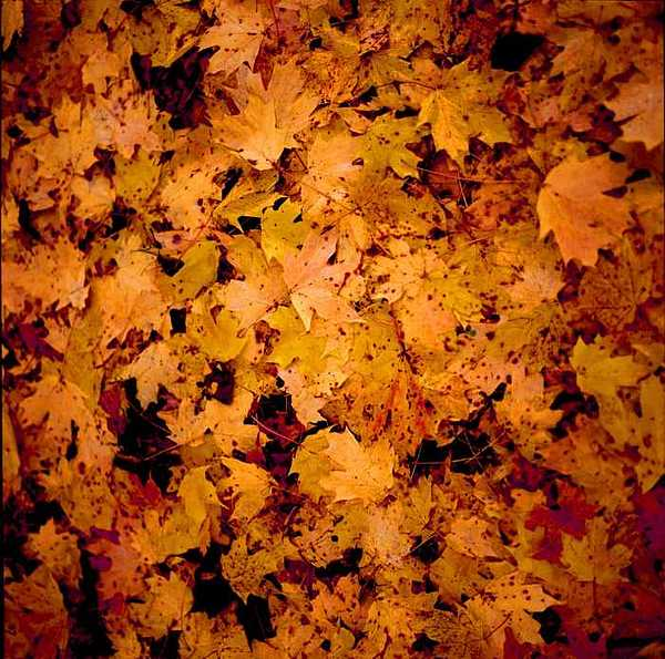 Autumn Photograph - Kentucky Autumn Leaves On Ground by George Ferrell