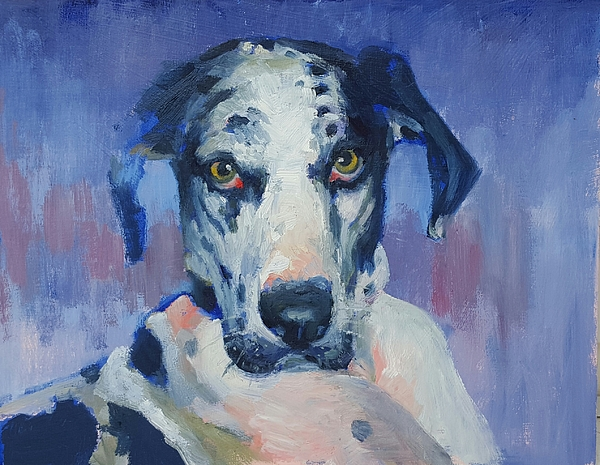 Harlequin Painting - Khloe Harlequin Great Dane by Nora Sallows