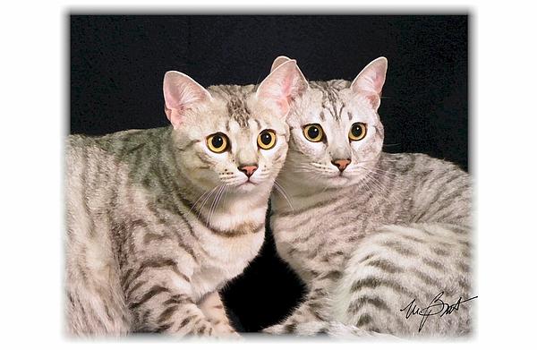 Cats Digital Art - Kissing Cousins by Maxine Bochnia