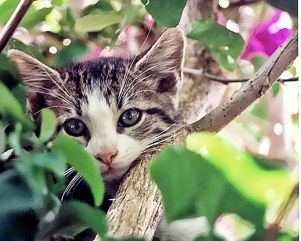 Cat Photograph - Kitten Hiding Out by Francesco Roncone