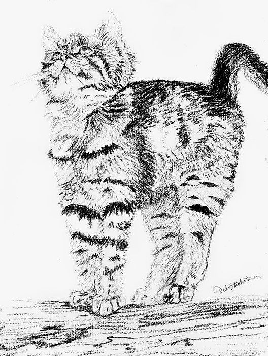 Kitty Stretch Drawing by Deb Stroh Larson