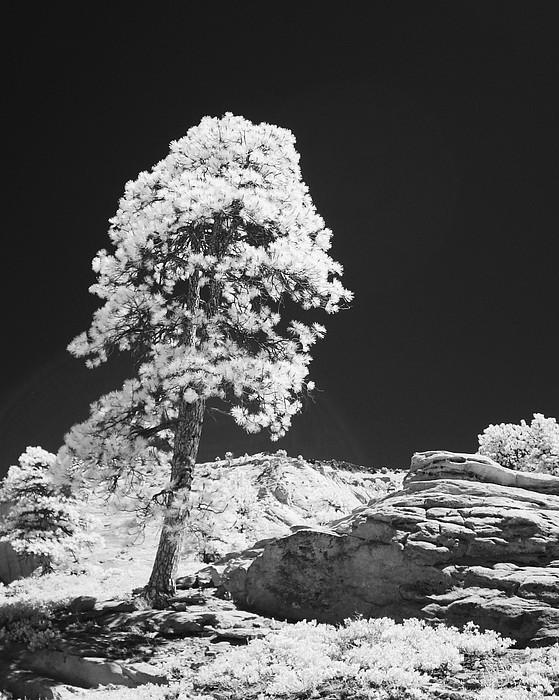 Desert Photograph - Kolab Canyon Utah by John Johnson