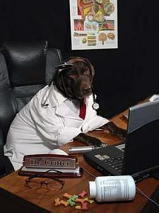 Pets Photograph - Lab Work Series - Ent Lab by Steve Shaluta