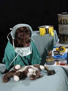 Pets Photograph - Lab Work Series - Veterinarian Lab by Steve Shaluta
