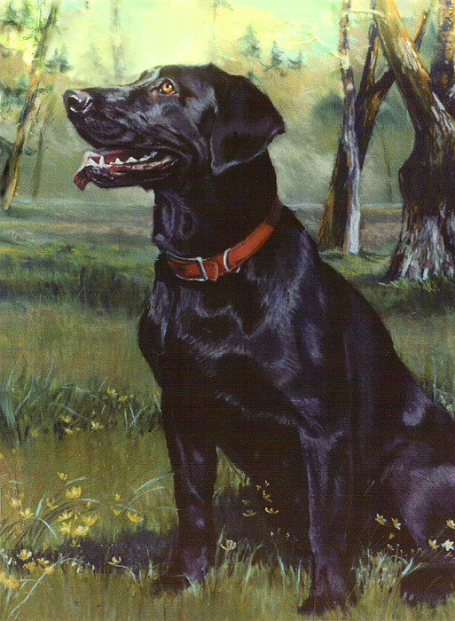 Dog Painting - Labrador Retriever by Jean Hildebrant
