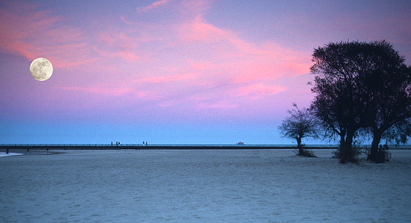 Chicago Photograph - Lake Shore Evening by Donald Schwartz