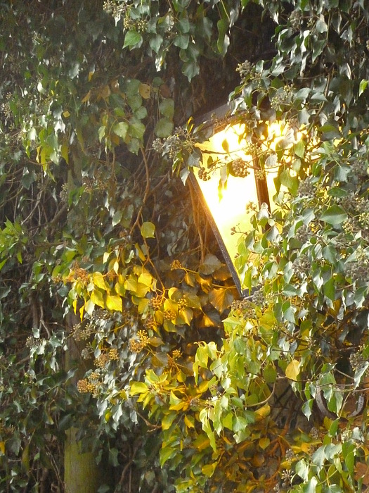 Lamplight Photograph by Jane Stanley
