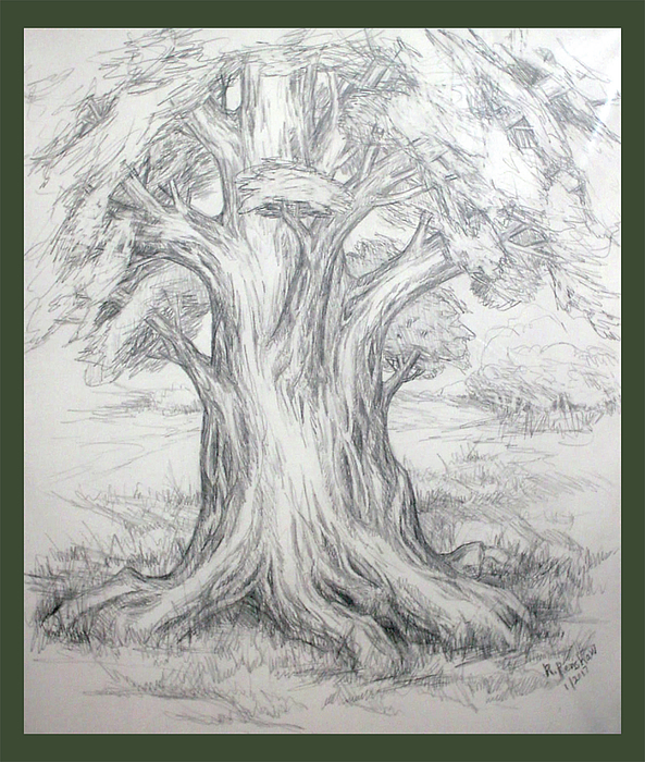Tree Drawing - Large Shady Tree by Ruth Renshaw