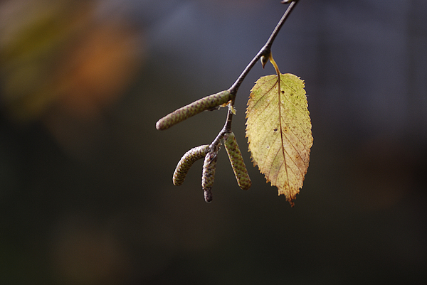 Nature Photography Photograph - Last Call Of Fall by Randy Bodkins