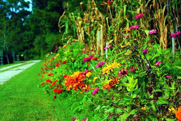 Flowers Photograph - Late Summer Flowers by Jill Tennison