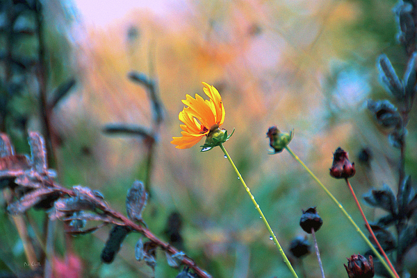 Flowers Photograph - Late Summer Rain From The Forest Floor by Bob Orsillo
