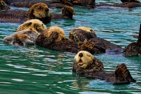 Alaska Photograph - Laugh It Up by David Wagner