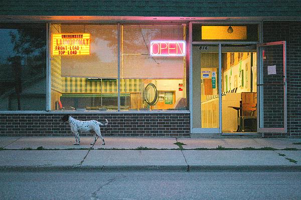 Dog Photograph - Laundromat Open by Steve Augustin
