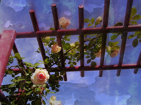 Roses Photograph - Lauras Rose Trellis 2 by Jen White