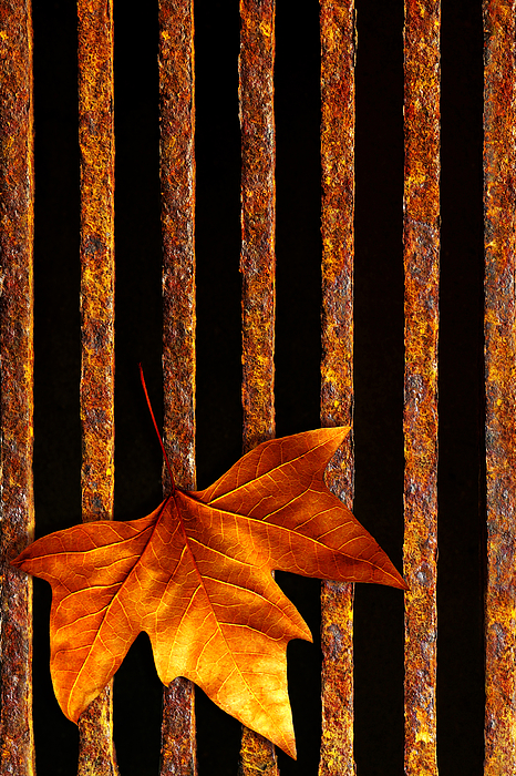 Abstract Photograph - Leaf In Drain by Carlos Caetano
