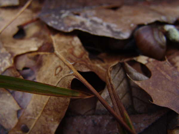 Leafs Photograph - Leafs With Snail 01 by Ryan Vaal