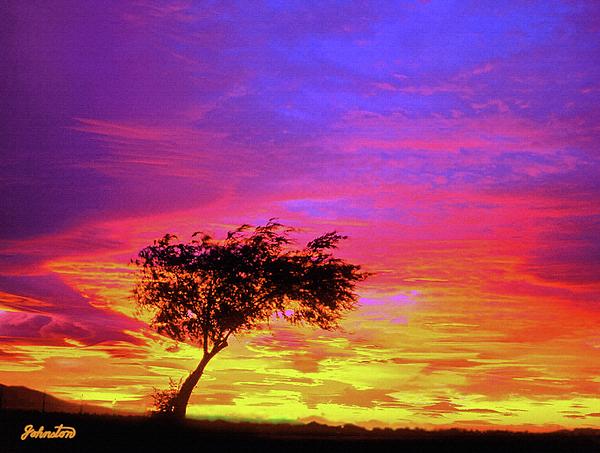 Bob and Nadine Johnston - Leaning Tree at Sunset