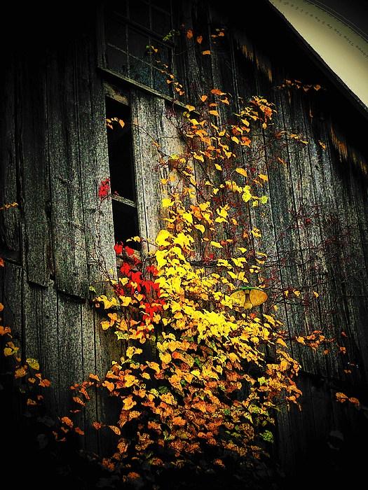 Barn Photograph - Leaves On An Old Barn by Joyce Kimble Smith