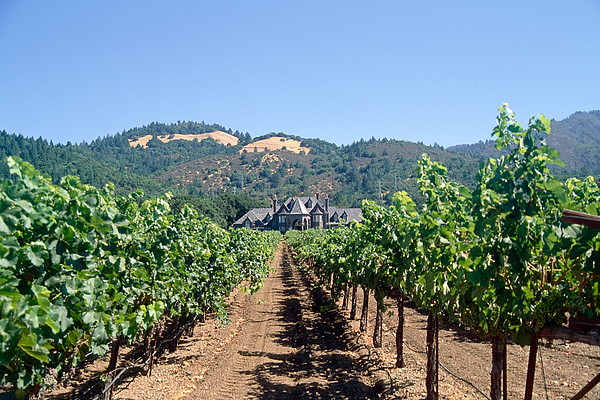 California Photograph - Ledson Winery And Vineyard Sonoma County California by George Oze