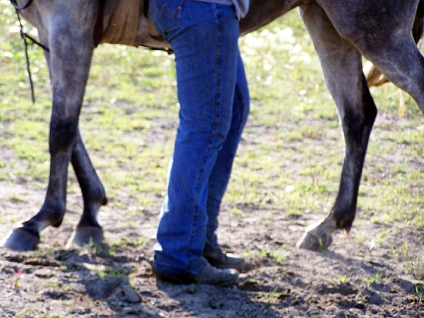 Horse Photograph - Legs by Tracy Siebels