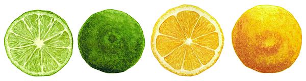 Lemon Painting - Lemons And Limes by Kathleen Skinner