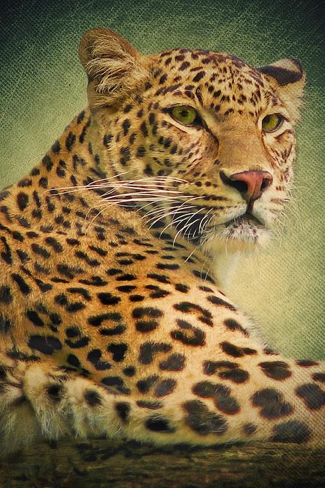 Leopard Digital Art - Leopard by Angela Doelling AD DESIGN Photo and PhotoArt