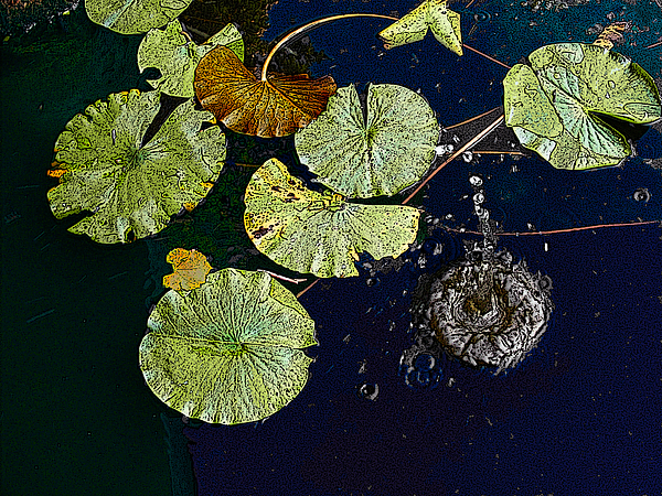 Lilly Pad Photograph - Life Of A Lily Pad 3 by Nicholas J Mast
