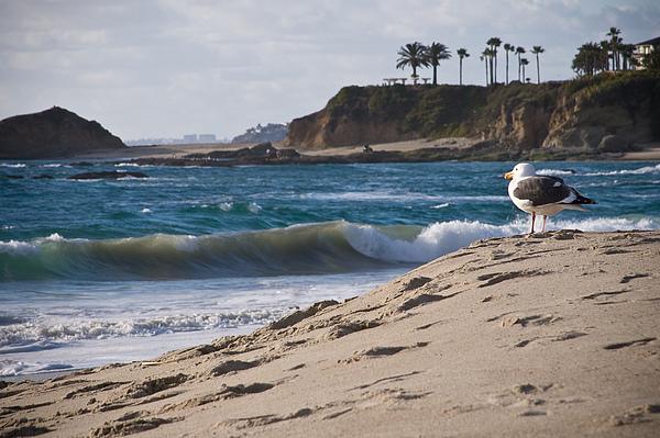 Seagull Photograph - Lifeguard by Carl Jackson