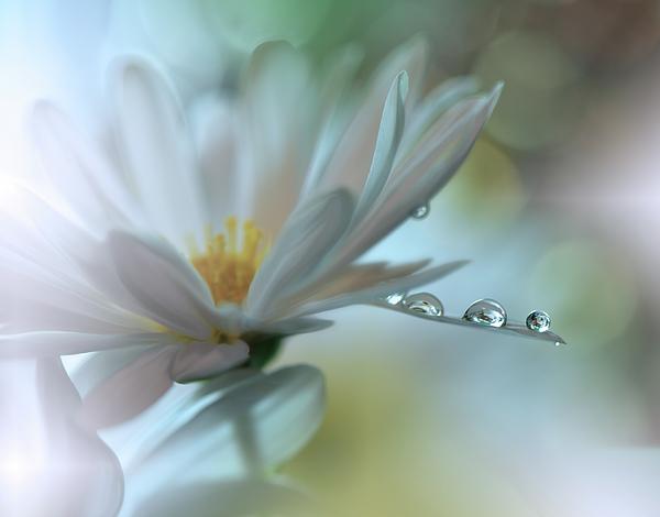 Aesthetic Photograph - ..light Touch... by Juliana Nan