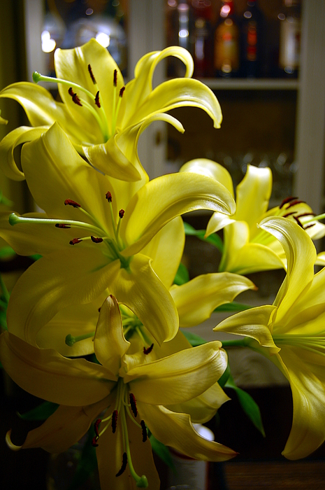 Lilies Photograph - Lilies by Siobhan Yost