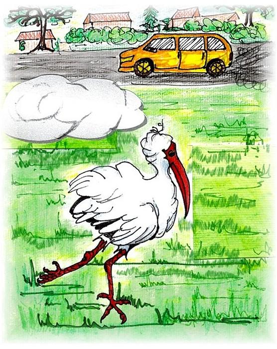Ibis Drawing - Limping Ibis by Carol Allen Anfinsen