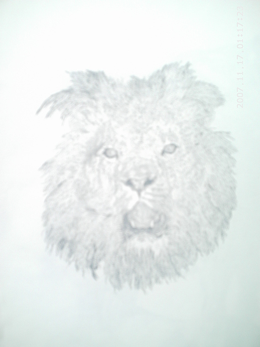 Nature Drawing - Lion In Wait by Peter Fredericks