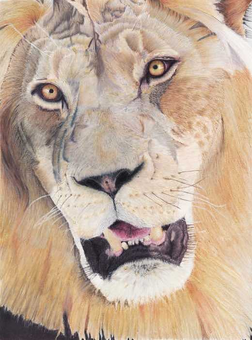 Lion Drawing by Janet Couture