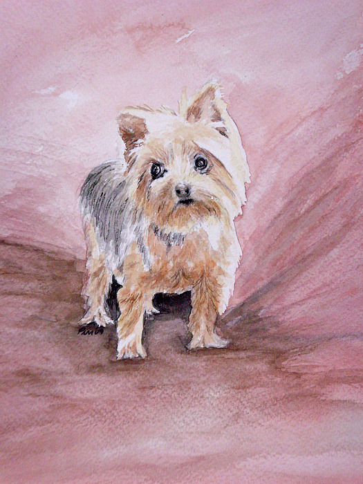 Yorkshire Terrier Painting - Little Boss by Pam Hurst