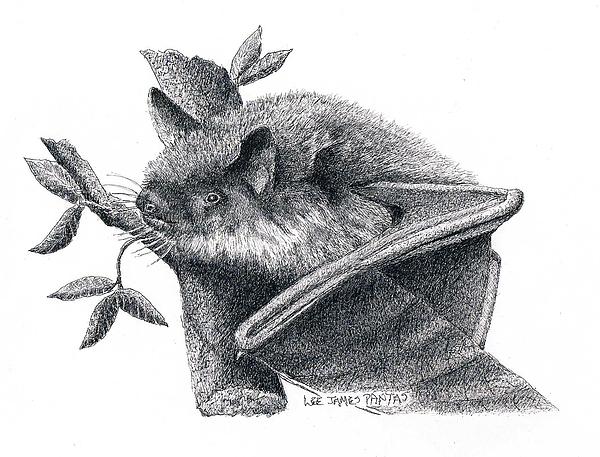 Bat Drawing - Little Brown Bat by Lee Pantas