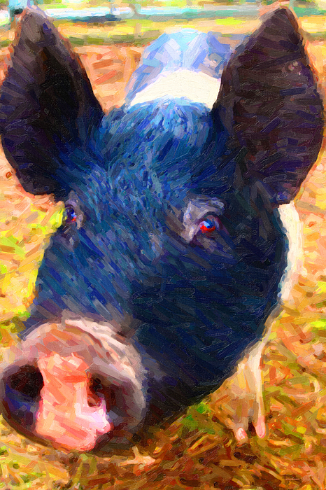 Animal Photograph - Little Miss Piggy by Wingsdomain Art and Photography