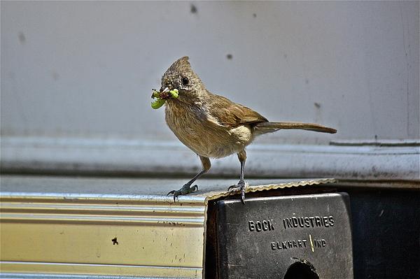 Birds Photograph - Little Mother by Diana Hatcher