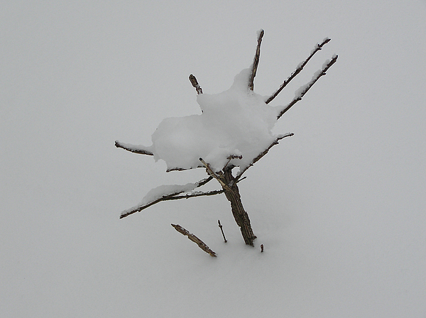 Tree Photograph - Little Tree In Winter by Richard Mitchell