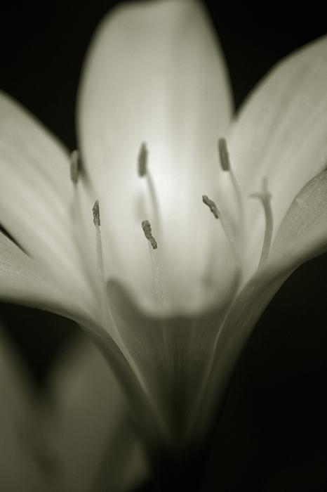 Flower Photograph - Live By The Sun by Amanda Clark
